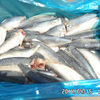 Продам: pacific Mackerel WR / HGT 09-07-2014